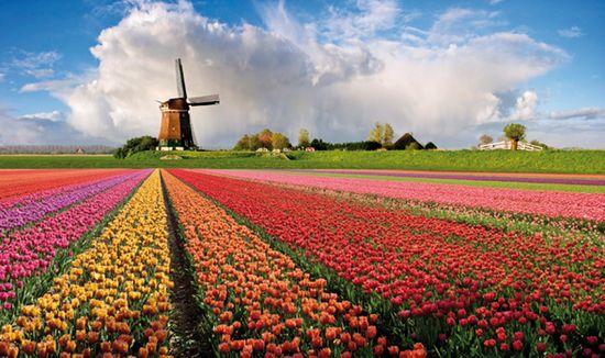 La crisi colpirà anche l'Olanda
